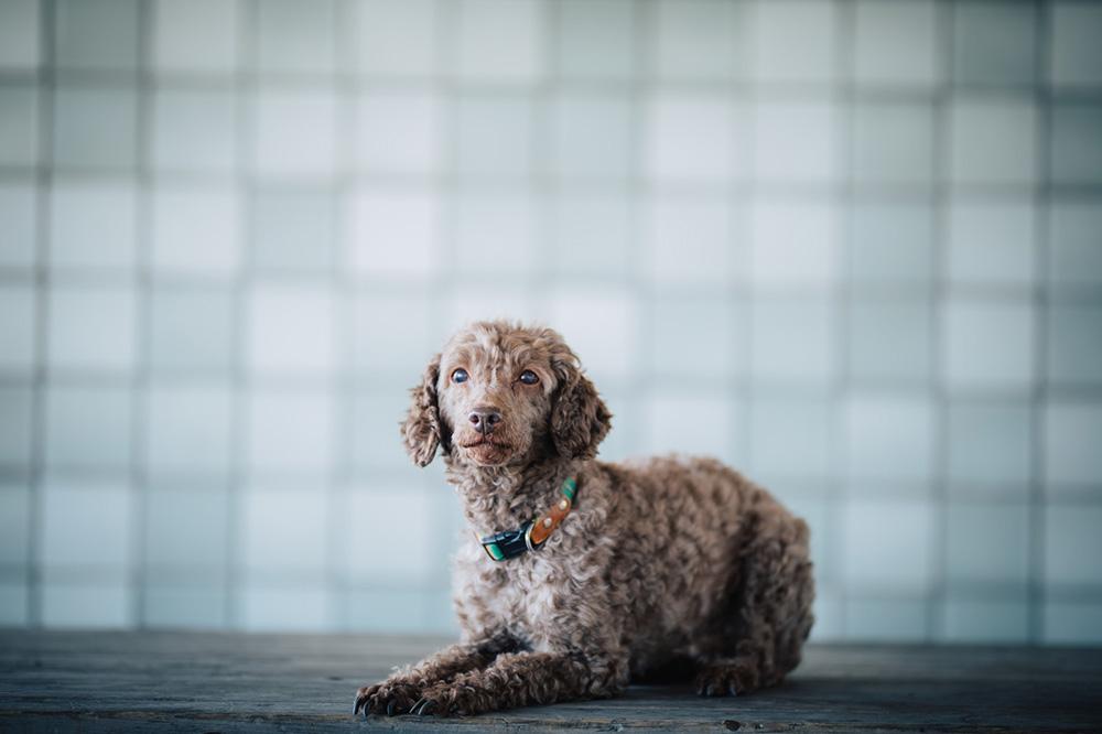 犬の基本的態度
