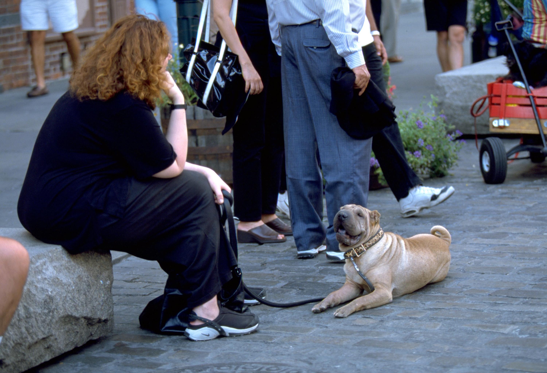 犬の主従関係