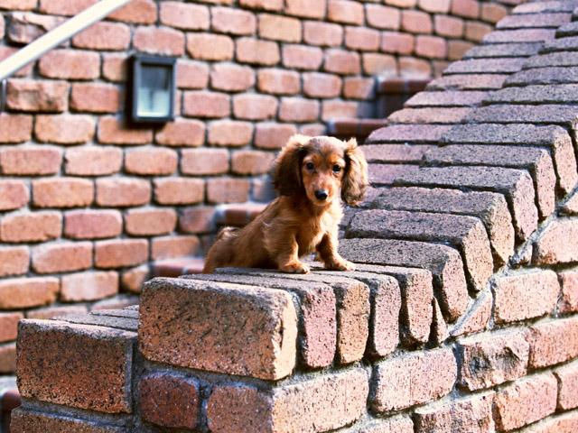 犬のしつけの適齢期