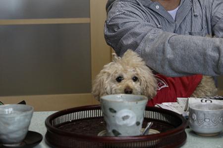 黒豆茶と犬の関係
