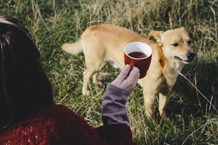 ほうじ茶と犬の関係