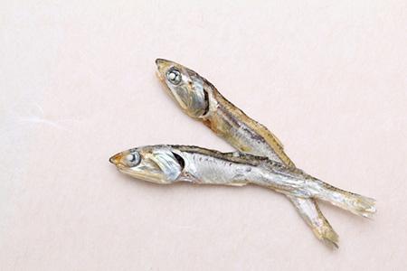 魚メインのドッグフードの特徴
