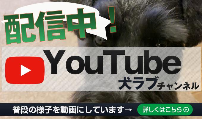 犬ラブYouTubeチャンネル