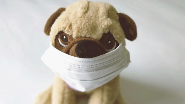 コロナウイルス犬