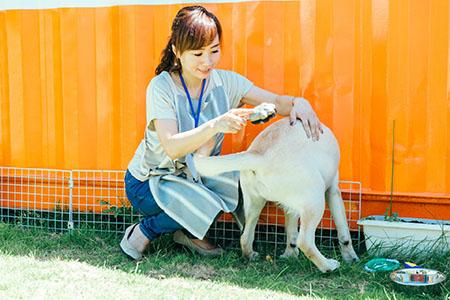 飼育系ボランティア