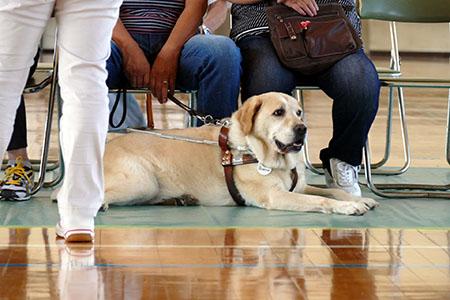 その他の犬ボランティア
